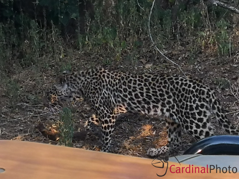 Leopard didn't seem too concerned with us