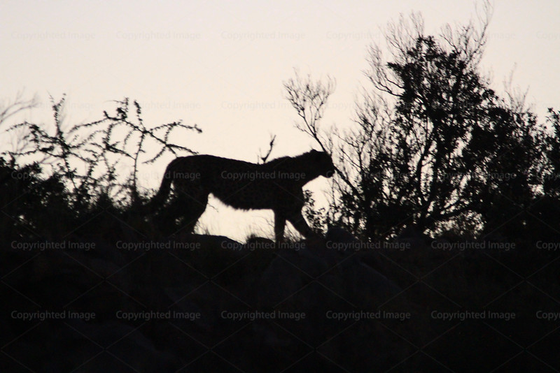 CRay-Africa16-4411