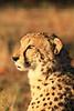 CRay-Africa16-4357