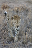 CRay-Africa16-9439