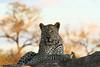 CRay-Africa16-9324