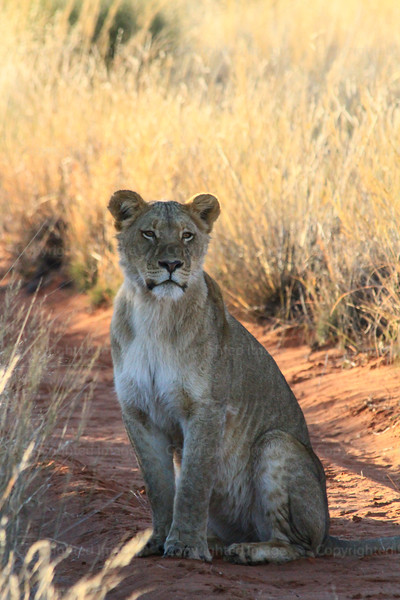 CRay-Africa16-4081