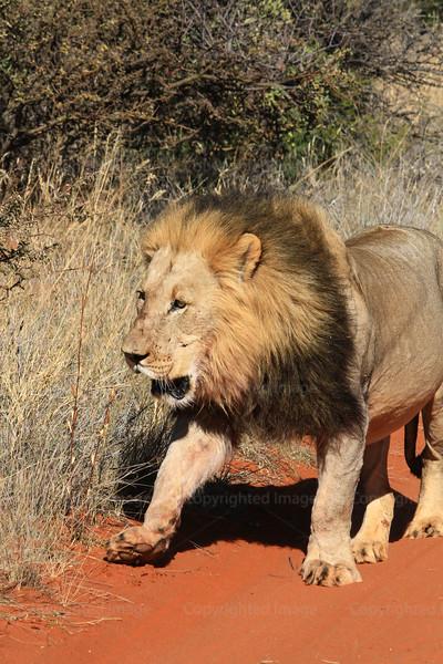 CRay-Africa16-4179