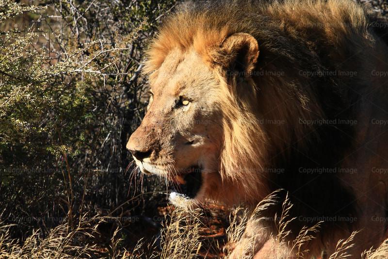CRay-Africa16-4156