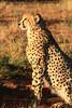 CRay-Africa16-4356