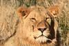 CRay-Africa16-4135