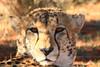 CRay-Africa16-4235