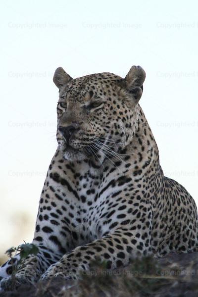 CRay-Africa16-9301