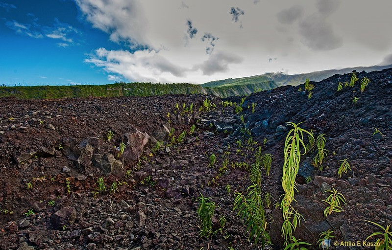 Lava Flow - Pointe du Tremblet, S. Reunion Is.