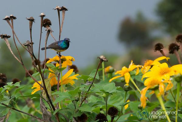 Bird and Flowers - Lake Burera, Rwanda