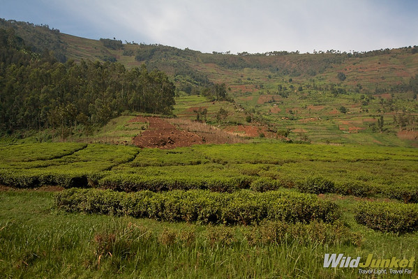 Beautiful fields surrounding Kigali