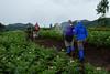 Approaching Volcanoes National Park, Rwanda, Africa.  March 2013