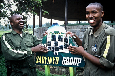 Off to see the Sabyinyo group of gorillas...