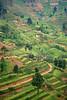 Terraced hills of Rwanda, evening. Near Cyato, western Rwanda.