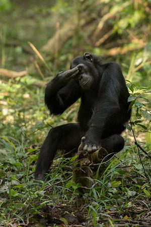 Kyambura Gorge, Uganda
