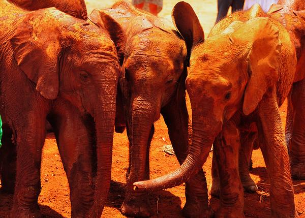 Three elephants - for sophie
