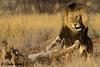 The Kalahari, Mabuasehube, Botswana