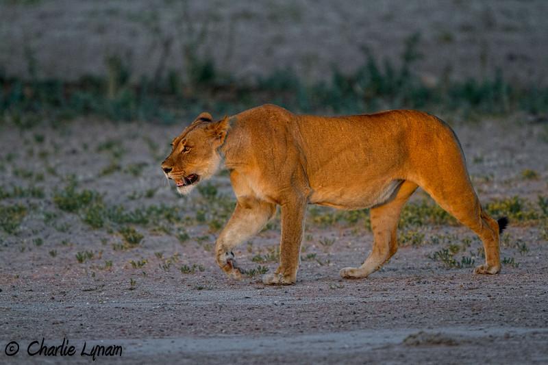 The Kalahari, Mata Mata, South Africa