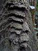 Termite nest, La Lope, Gabon