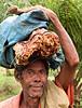 Man, Belo Monte Plantation, Principe