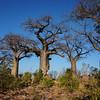Baobab cluster
