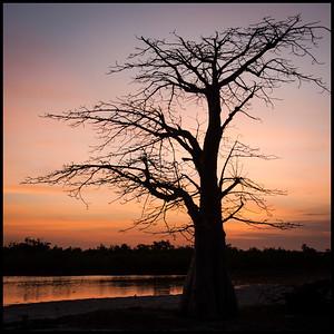 Boabab tree at sunset, Île de Carabane