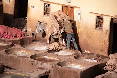 loading leather hides onto donkeys - they will unload and sit in the sun for two days to dry