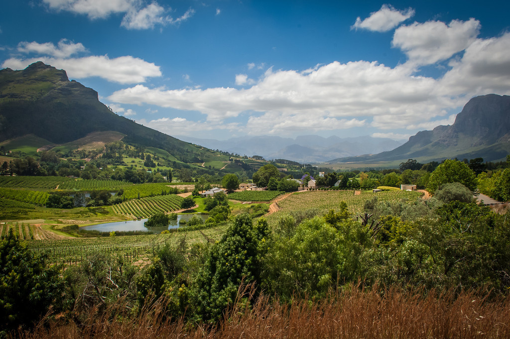 Cape Winelands  Stellenbousch, South Africa