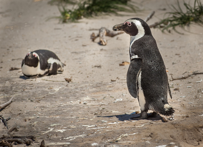 019__Cape_Town_South_Africa_2006_0170