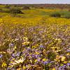 Za 1039 Nieuwoudtville wildflower reserve
