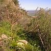 Za 0020 Trachyandra muricata