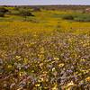 Za 1038 Nieuwoudtville wildflower reserve