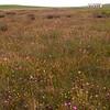 Za 5090 Tinie Versveld wildflower reserve