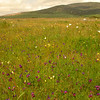 Za 4912 Oudepos wildflower reserve
