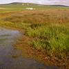 Za 5118 seasonal pond in Tinie Versveld