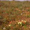 Za 4602 Nieuwoudtville wildflower reserve