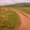 Za 4866 Oudepos wildflower reserve