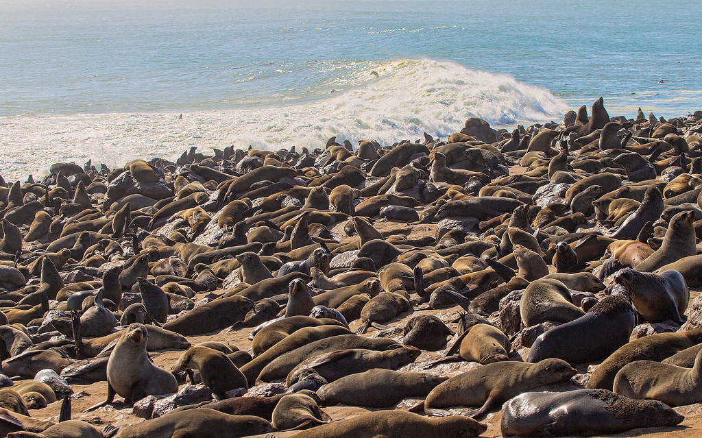 The Seal Colony at Henties Bay, Cape Cross, South Arica