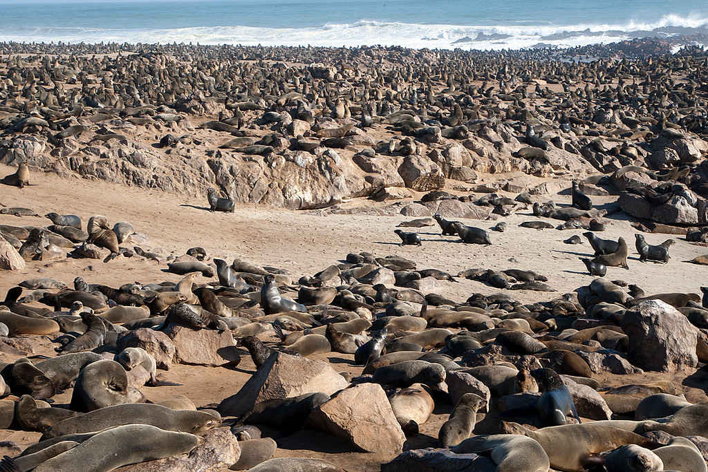 The Seal Colony at Cape Cross, South Africa