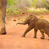 baby-elephant-south-africa