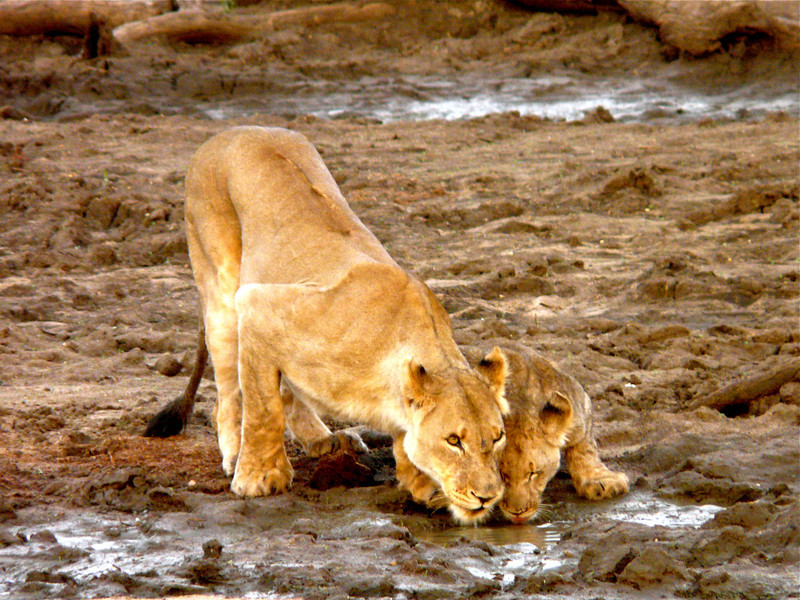 Mother and child at the watering hole in Madikwe Game Reserve