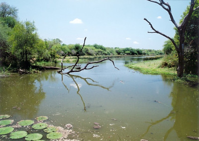 Lake Panic, Kruger NP
