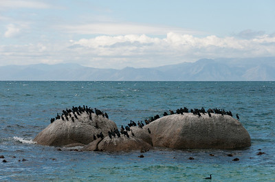 Birds on a boulder in Boulders Beach, South Africa