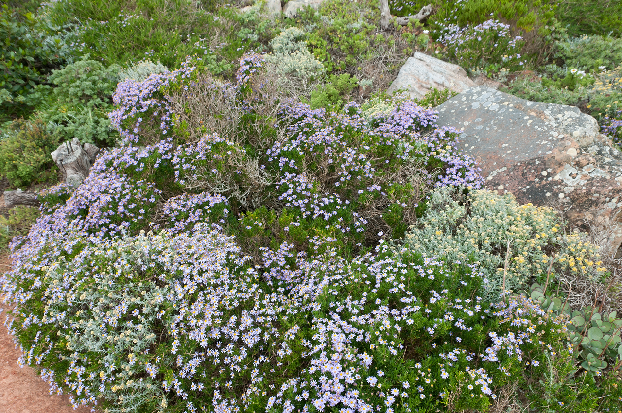 Cape Floral Region Protected Areas