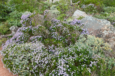 Beautiful blooms in Cape Point, South Africa