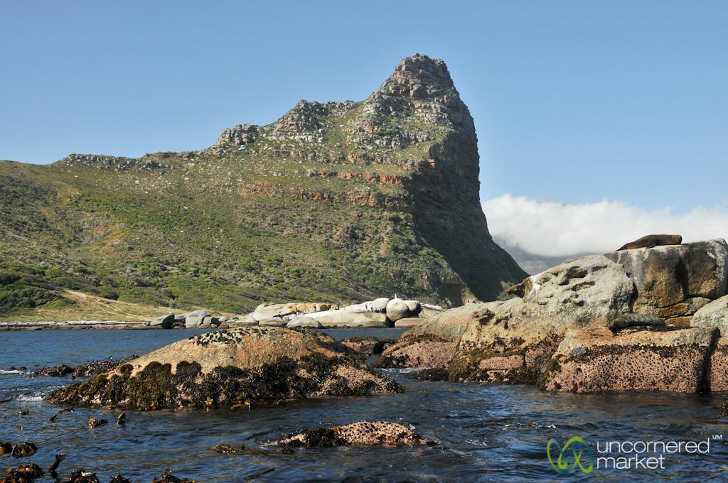 Seals Sleeping on Rocks Near Hout Bay, Cape Town