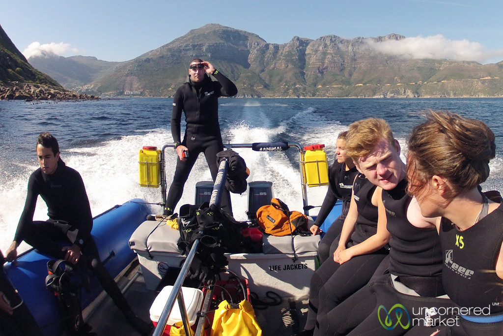 Snorkeling with Seal Pups, Boat Ride - Hout Bay, Cape Town