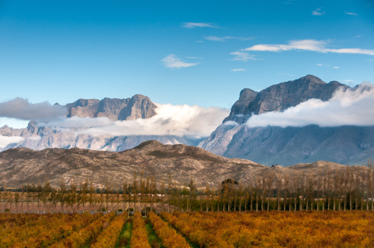 Table Mountain and vineyard in South Africa