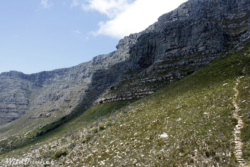 The hiking trail up Table Mountain