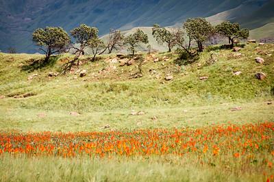 Drakensberg Park in South Africa